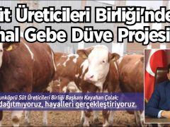 Süt Üreticileri Birliği'nden İthal Gebe Düve Projesi