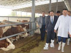 Çiğ süt destekleri hesaplara yatırıldı